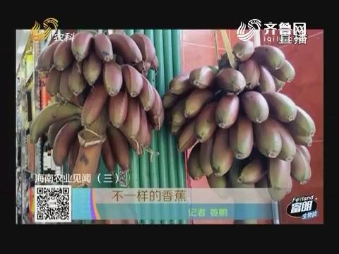 海南农业见闻(三) 不一样的香蕉