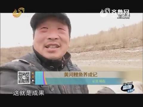 黄河鲤鱼养成记