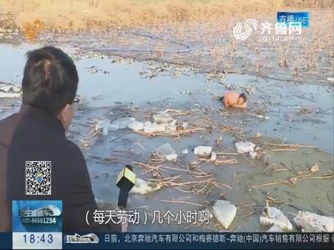 潍坊:寒冬里的采藕人