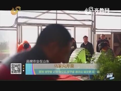 【品牌农业在山东】马家沟芹菜