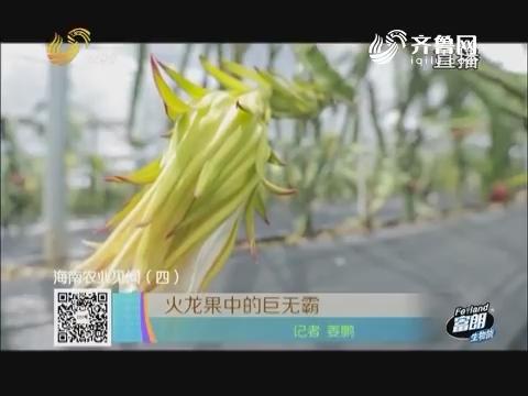 海南农业见闻(四)火龙果中的巨无霸