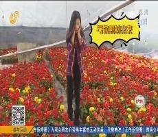 【齐鲁最美乡村】青州:不缺花 这里的冬天鲜花遍地