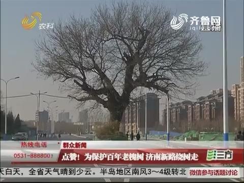 【群众新闻】点赞!为保护百年老槐树 济南新路绕树走