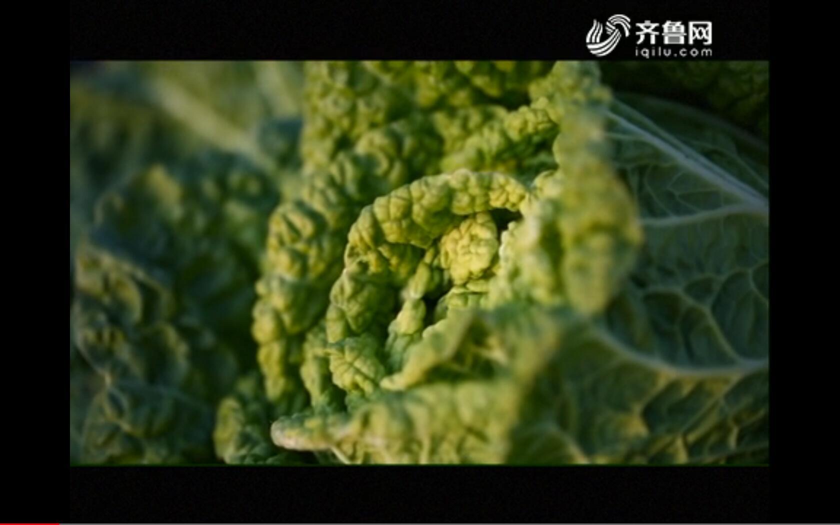 【品牌农业在山东】胶州大白菜