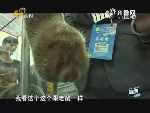 海南农业见闻(五)爱吃竹子的山中美味