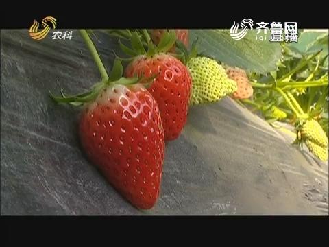 【2018,为梦想打call】楚玉环:走心草莓卖的俏