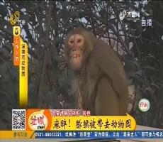 新鲜!淄博市区惊现猕猴
