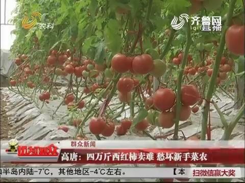 【群众新闻】高唐:四万斤西红柿卖难 愁坏新手菜农