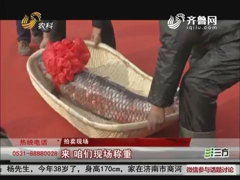 好彩头!济宁68.8斤青鱼王拍出16.8万