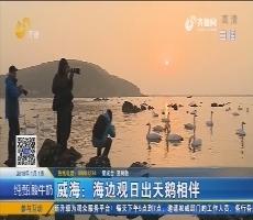 威海:海边观日出天鹅相伴