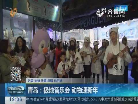 青岛:极地音乐会 动物迎新年