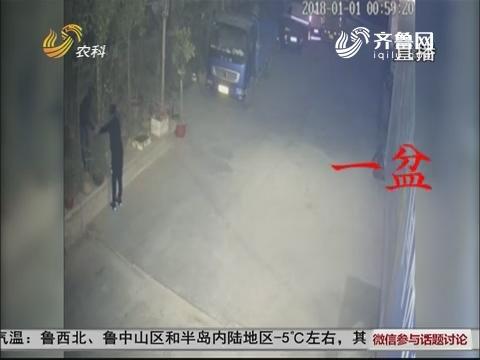 诸城:跨年夜两男子去偷盆景