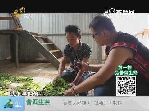 20180104《中国原产递》:普洱生茶