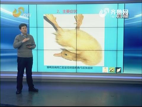 20180105《农科直播间》:创新山东看家禽