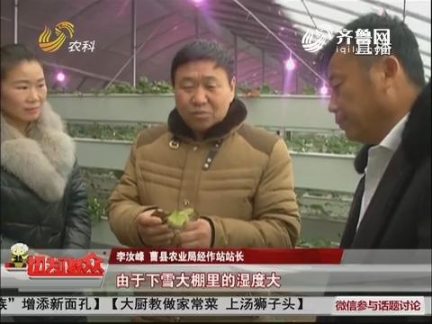 曹县:注意!大雪降温 大棚蔬菜生长受影响