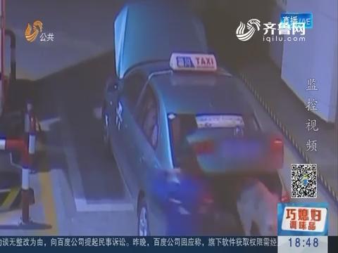 """狗狗搭上""""顺风车"""" 济南""""打的""""来淄博"""
