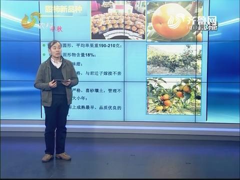 """20180109《农科直播间》:创新龙都longdu66龙都娱乐 让""""柿""""业更红火"""