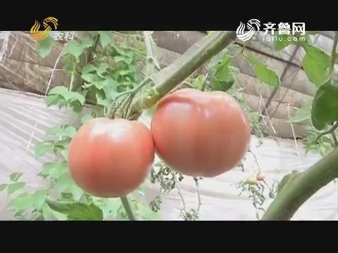 """20180109《品牌农资龙虎榜》:齐河——幸福的""""烦恼"""""""