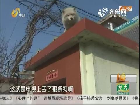 """淄博:打的狗""""大白""""有下落了!"""