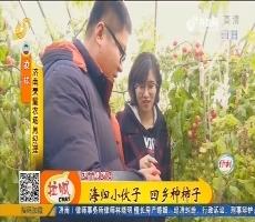【小家大事】济南:海归小伙子  回乡种柿子