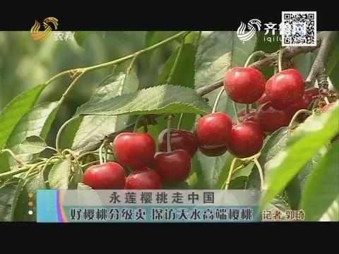 永莲樱桃走中国:好樱桃分级卖 探访天水高端樱桃