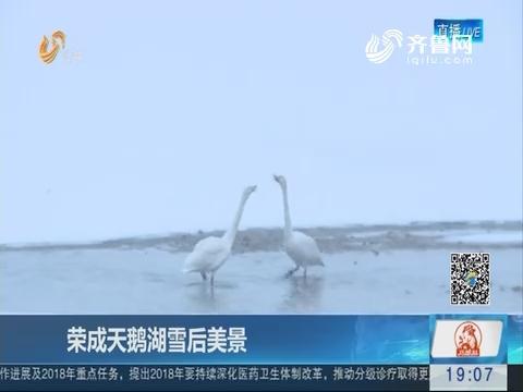 荣成天鹅湖雪后美景