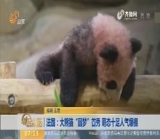 """【闪电热度排行榜】法国:大熊猫""""圆梦""""首秀 萌态十足人气爆棚"""