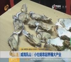 威海乳山:小牡蛎串起养殖大产业