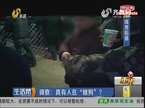 """【重磅】聊城:爆料 有人在组织""""赌狗"""""""