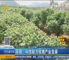 平阴:科技助力玫瑰产业发展
