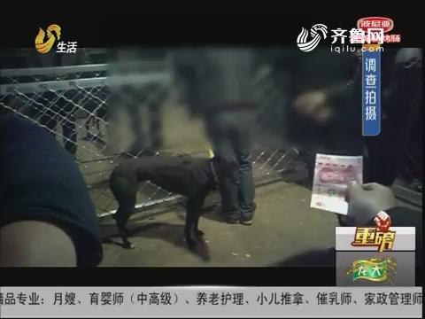 【重磅】调查:两条狗赛跑 能现场下注?