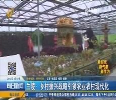 兰陵:乡村振兴战略引领农业农村现代化