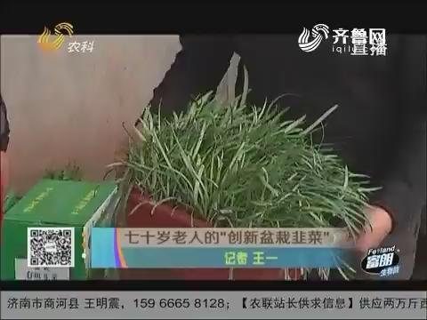 """七十岁老人的""""创新盆栽韭菜"""""""