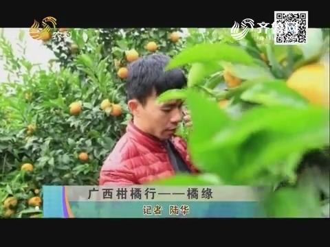广西柑橘行——橘缘