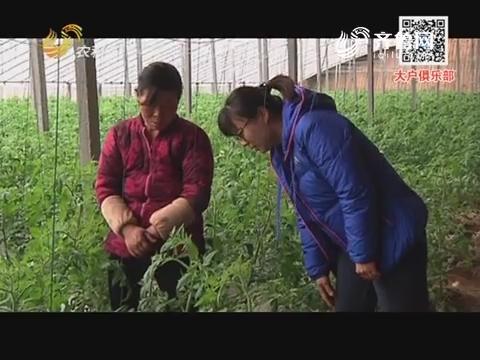 西红柿怎么落花了?