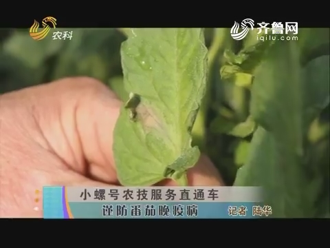 小螺号农技服务直通车:谨防番茄晚疫病