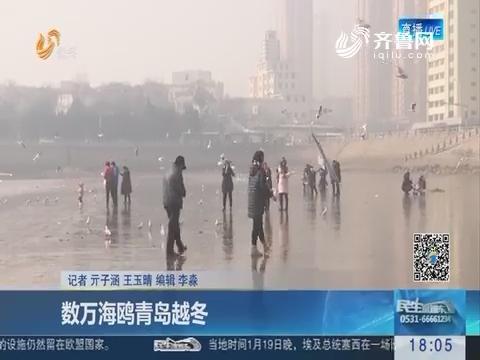 数万海鸥青岛越冬