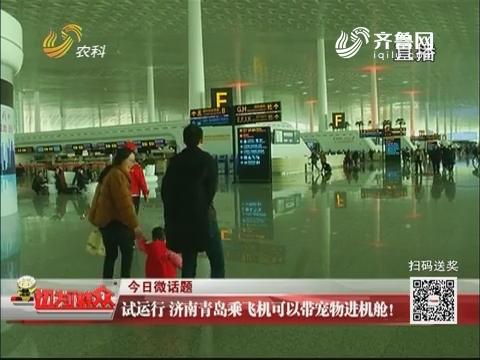今日微话题:试运行 济南青岛乘飞机可以带宠物进机舱!