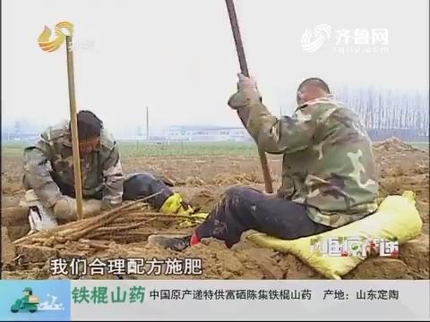 20180121《中国原产递》:陈集铁棍山药