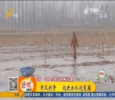 【齐鲁最美乡村】高青:寒风刺骨 泡进冰水挖莲藕