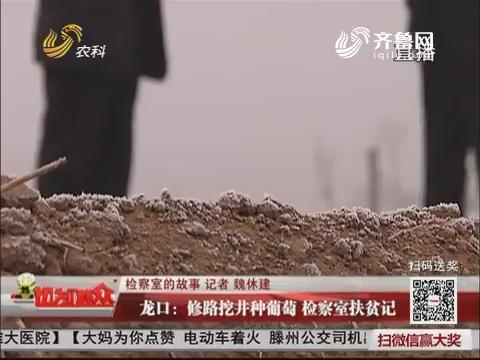 【检察室的故事】龙口:修路挖井种葡萄 检察室扶贫记