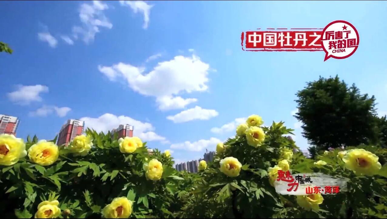 惊艳!《魅力中国城·菏泽》竞演宣传片出炉