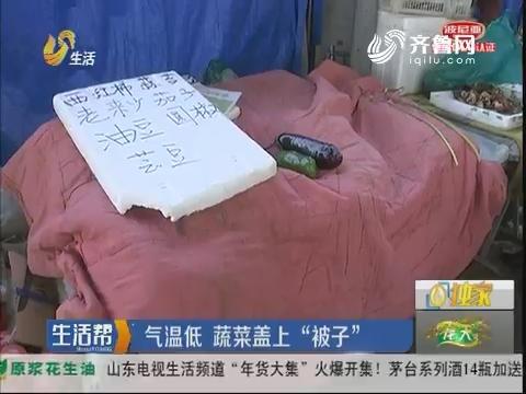 """济南:气温低 蔬菜盖上""""被子"""""""