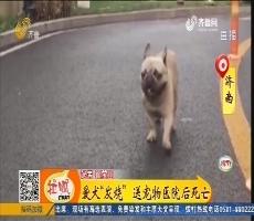 """济南:爱犬""""发烧"""" 送宠物医院后死亡"""
