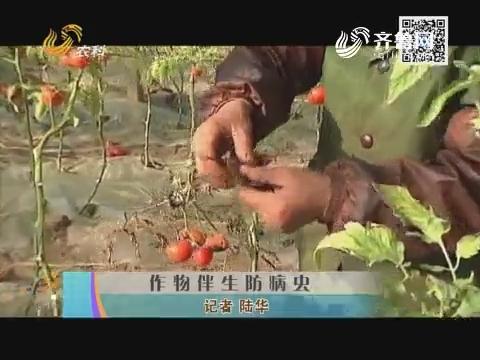 作物伴生防病虫