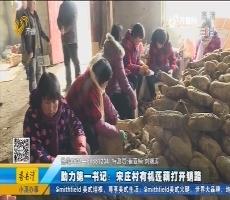 助力第一书记:宋庄村有机莲藕打开销路
