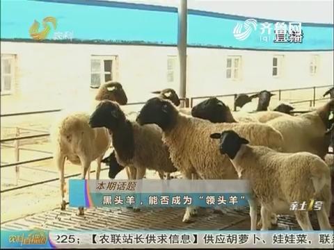 """20180204《农科tb988间》:黑头羊,能否成为""""领头羊"""""""