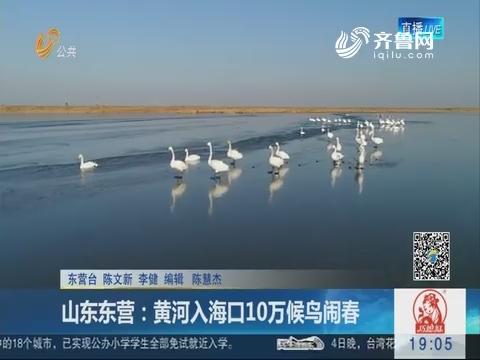 山东东营:黄河入海口10万候鸟闹春