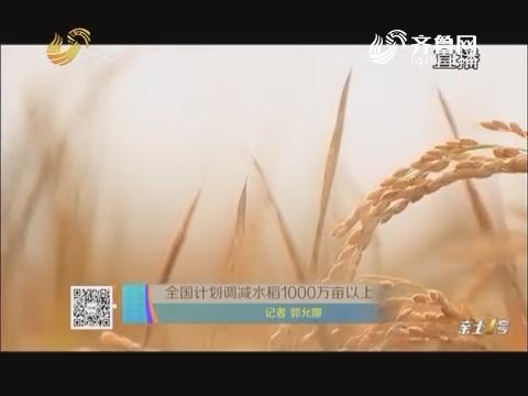 全国计划调减水稻1000万亩以上