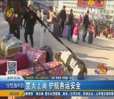 【新春走基层】济南:警犬上岗 护航春运安全